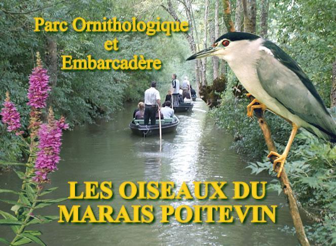 les-oiseaux-du-marais-poitevin-saint-hilaire-la-palud-1318983775-1